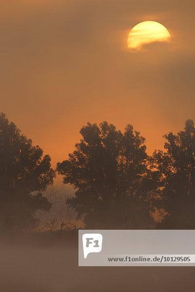 Morgenstimmung im Nebel auf der Peene bei Sonnenaufgang  Landkreis Demmin  Mecklenburg-Vorpommern  Deutschland  Europa