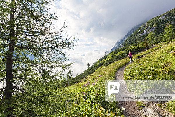 Frau beim Bergwandern  Berchtesgadener Alpen  Bayern  Deutschland  Europa
