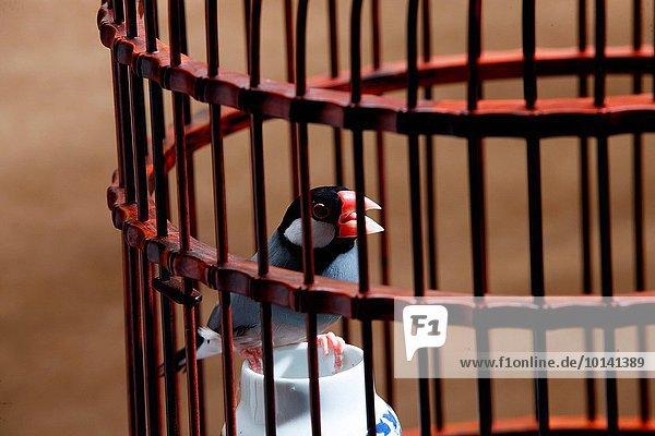 Vogel Vogelkäfig