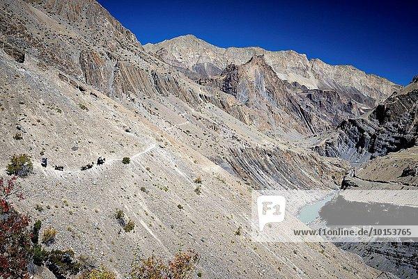zwischen inmitten mitten Esel Tal Gepäckträger Portier Himalaya Indien Ladakh