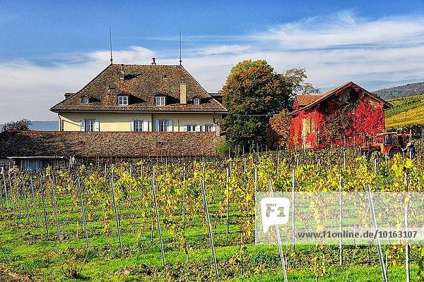 nahe Europa See Palast Schloß Schlösser Genf Schweiz Kanton Waadt