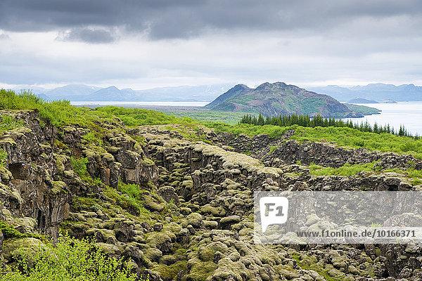 Lavafeld im Nationalpark Þingvellir auch Thingvellir oder Pingvellir  Island  Europa