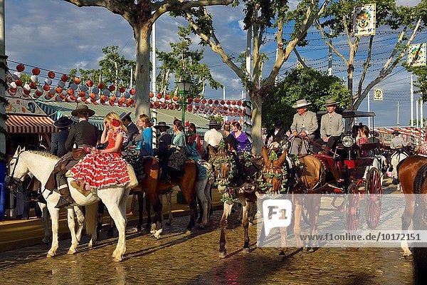 Kopfsteinpflaster Straße Maultier reiten - Pferd Transport April Sevilla