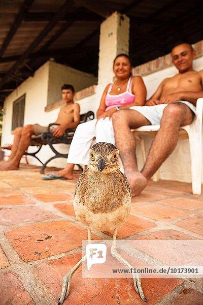 Mensch Amerika Entspannung Menschen Vogel Kolumbien