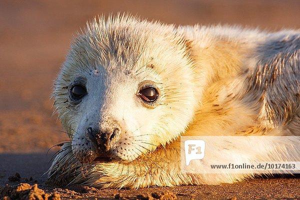 Naturschutzgebiet Europa Laubengang Laube England grau Robbe