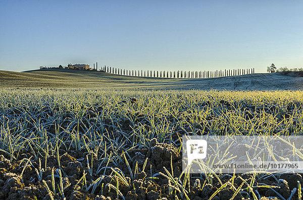 'Altes Haus mit Zypressen in der Landschaft bei Sonnenaufgang  Val d'Orcia  Toskana  Italien  Europa'