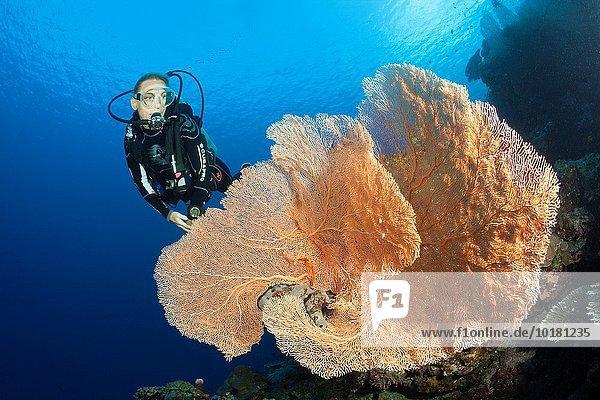 über Taucher Riff Salomonen