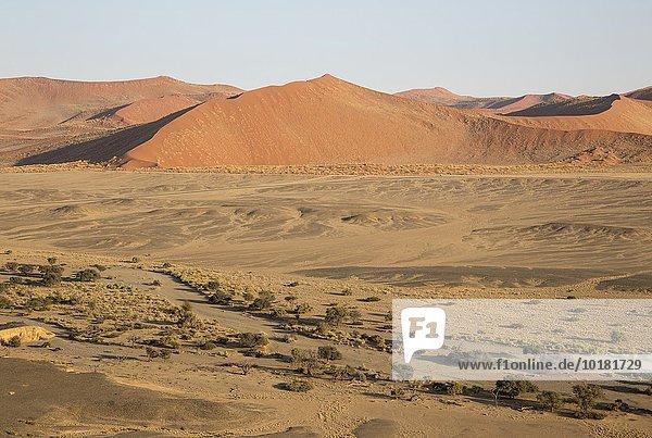 Luftbild  Trockengebiete mit dem ausgetrockneten Flussbett des Tsauchab Trockenflusses am Rande der Namib-Wüste  asphaltierte Straße zwischen Sesriem und Sossusvlei  Kameldornbäume (Acacia erioloba)  Namib-Naukluft-Nationalpark  Namibia  Afrika