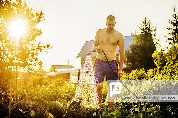 Wasser Europäer Mann Garten Pflanze Hinterhof