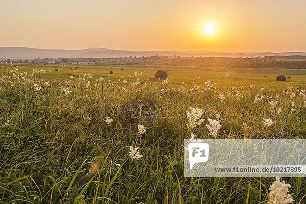Ländliches Motiv ländliche Motive Feld Sonnenuntergang Wachstum groß großes großer große großen Gras