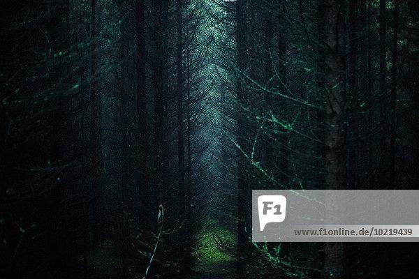 Dunkelheit Baum Wald Sonnenlicht Dunkelheit,Baum,Wald,Sonnenlicht