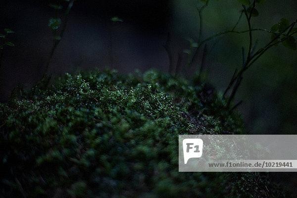 Dunkelheit Wachstum Wald Close-up Moos Dunkelheit,Wachstum,Wald,Close-up,Moos