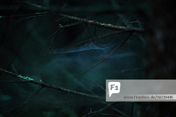 Dunkelheit Wald Close-up Ast Spinnwebe Dunkelheit,Wald,Close-up,Ast,Spinnwebe