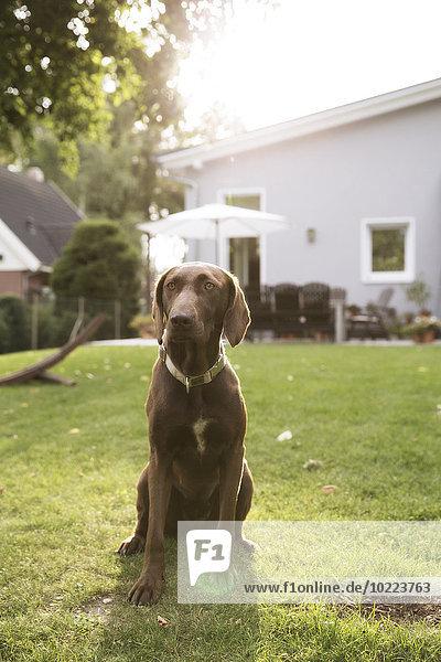 Deutschland  Eggersdorf  Hund sitzend auf Rasen im Garten