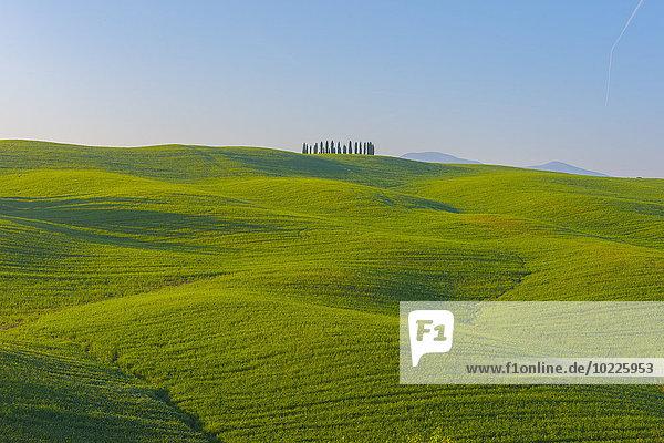 Italien  Toskana  Val d'Orcia  Blick auf die hügelige Landschaft