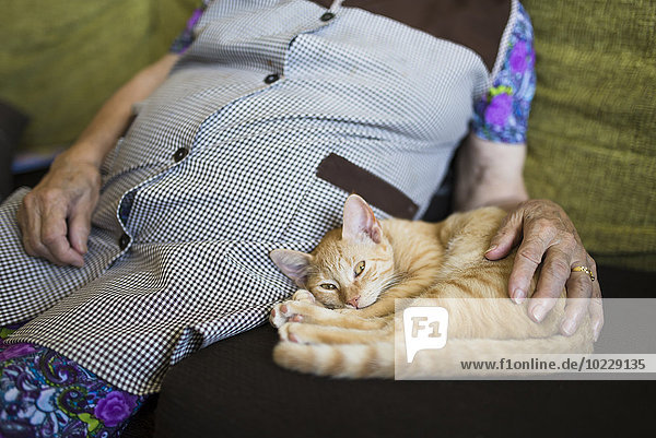 Tabby kitten lying besides old woman on the couch