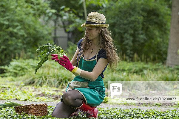 Junge Frau bei der Ernte von Kohlrabi