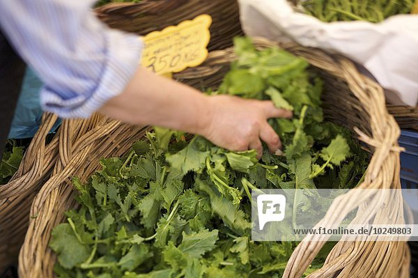 Blumenmarkt, grün, Markt, Blumenmarkt, grün, Markt
