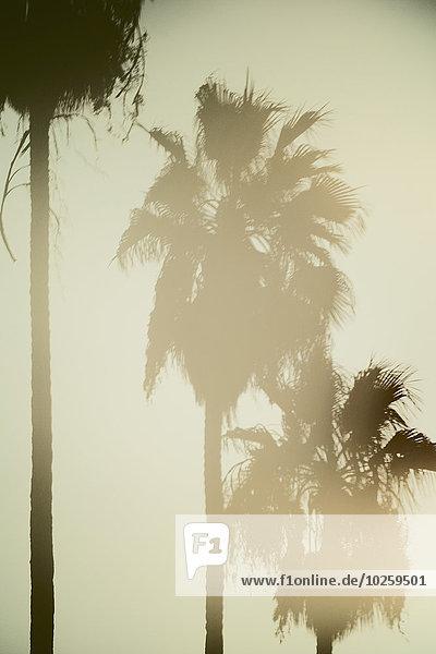 Palmen gegen den klaren Himmel bei Sonnenuntergang