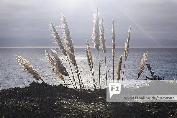 Grasanbau auf dem Seeweg