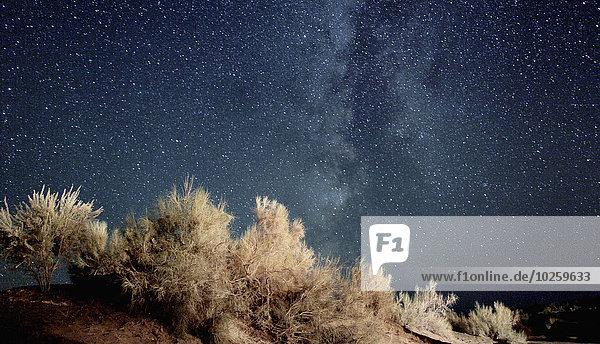 Trockene Pflanzen gegen den Himmel bei Nacht  Aydar See  Usbekistan