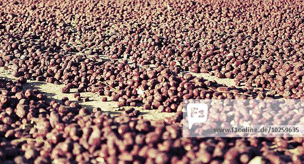 Vollbildaufnahme von frisch geernteten Lebensmitteln auf dem Boden  Region Hotan  China