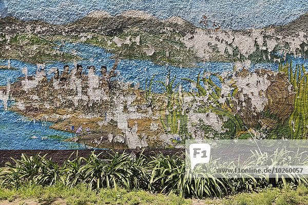 Grasanbau unter verwitterten  gestrichenen Wänden im Freien
