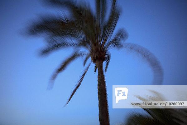 Verschwommene Bewegung der Palmen gegen den klaren blauen Himmel