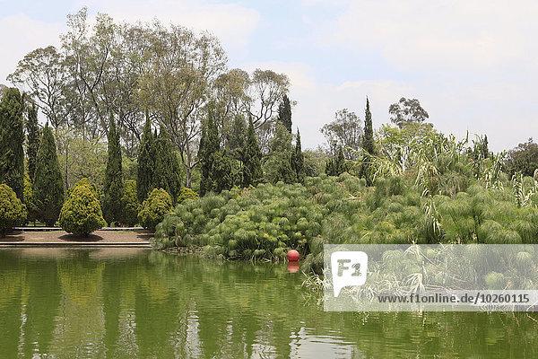 Bäume wachsen am Teich gegen den Himmel