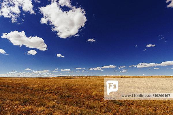 Landwirtschaftliches Feld gegen den blauen Himmel