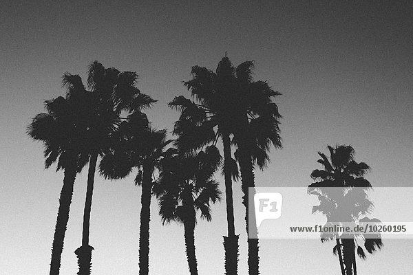 Blick auf die Silhouette von Palmen gegen den klaren Himmel in der Abenddämmerung