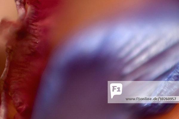 Detail eines violetten Blütenblattes