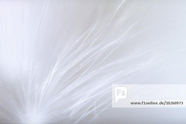 Detailaufnahme einer weißen Blume