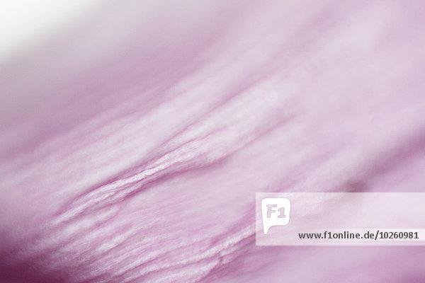 Vollbild-Aufnahme eines rosa Blütenblattes