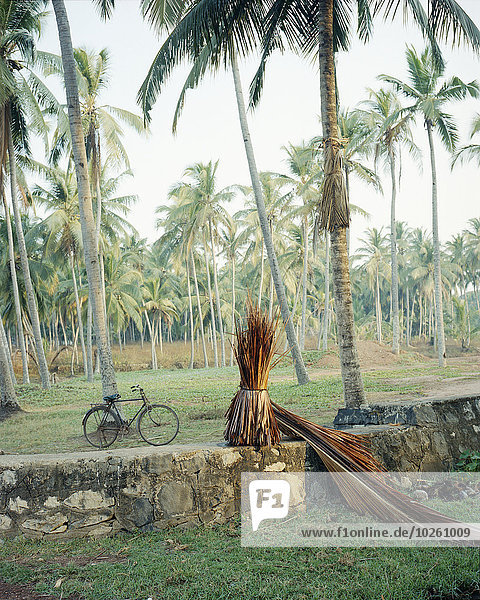 Auf dem Feld wachsende Palmen
