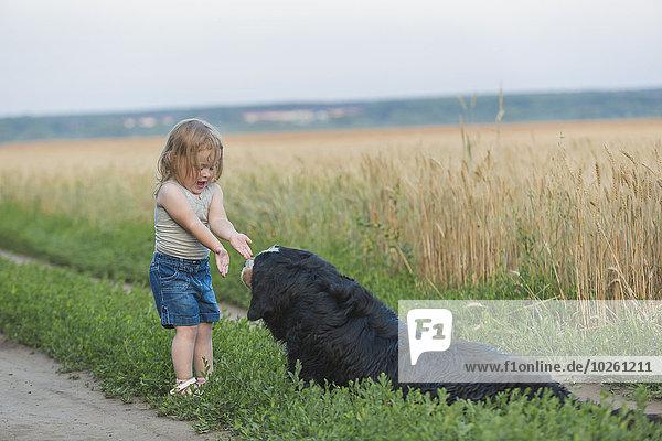 Mädchen spielt mit Hund auf dem Feld