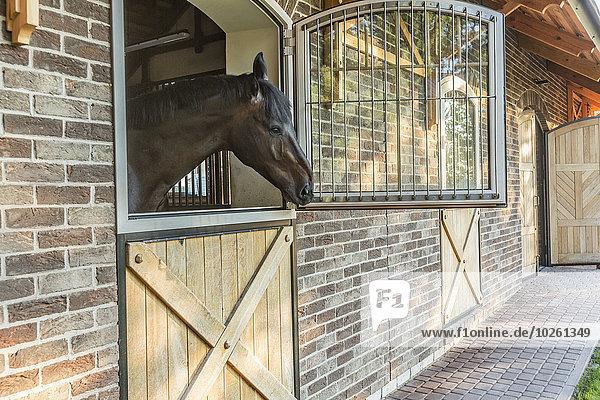 Seitenansicht des Pferdes im Stall