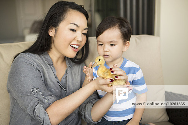 Frau sehen lächeln Sohn gelb halten jung Entenküken
