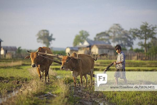 Wasser Junge - Person Büffel Bangladesh pflügen