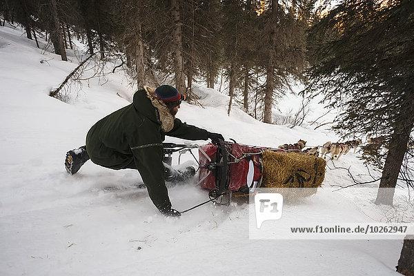 Überprüfung Hügel Hund See Reh Capreolus capreolus verlassen Schlitten Rutsche rutschen