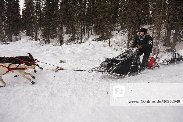 Hügel rennen Hund See Überprüfung verlassen Schlitten