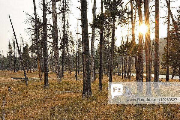 Vereinigte Staaten von Amerika USA Baum Wald Herbst Yellowstone Nationalpark Sonne Wyoming