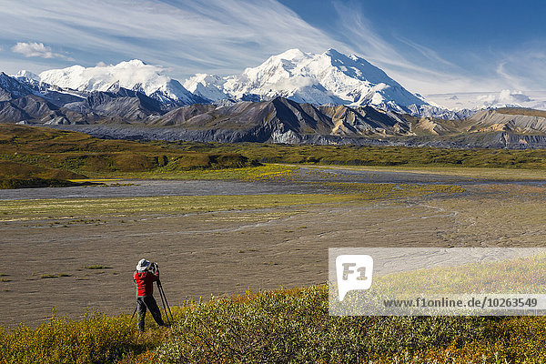 A male tourist photographs Mt. McKinley and the Thorofare River valley in Denali National Park  Interior Alaska  USA.