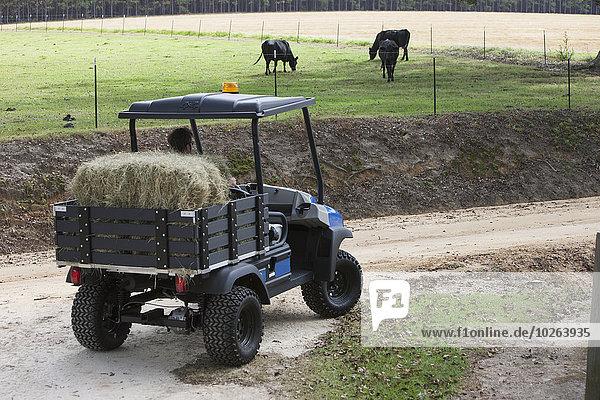 Verkehr Rind Heu Bauer Verbindung Rindfleisch bringen