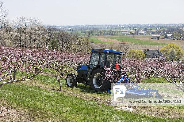 Traktor blühen Obstgarten Verbindung Pfirsich Niederlande neu
