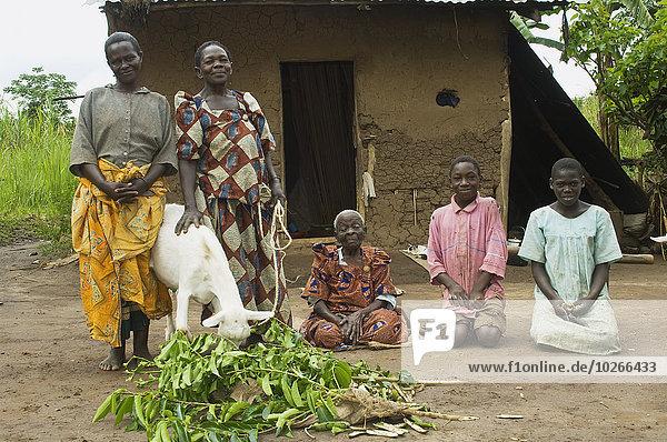 Außenaufnahme gebraucht Hütte Ziege Capra aegagrus hircus Frau schneiden Produktion Landwirtschaft Dorf Gras alt Afrika füttern Milch Uganda