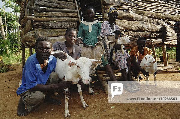 Außenaufnahme Ziege Capra aegagrus hircus Afrika Kenia vieh