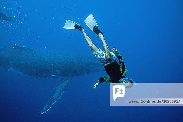 Tourist Wal schwimmen Tonga