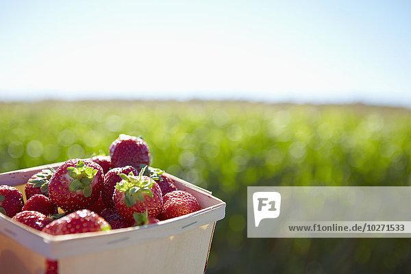Korb Agrarland Hintergrund Erdbeere voll Quebec