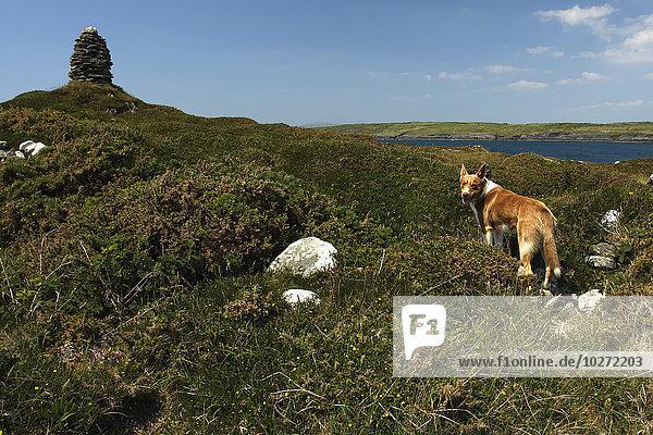 Hund lang langes langer lange ungestüm Insel Atlantischer Ozean Atlantik Weg